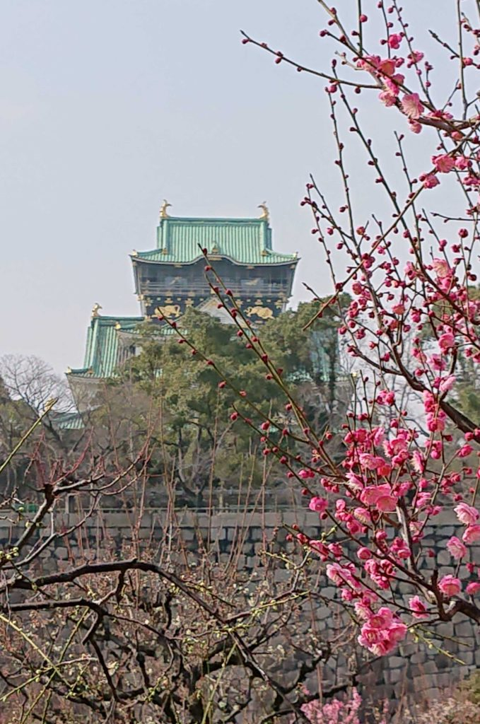 🌺大阪城 梅林2020~春を先取り、梅花見~🌺